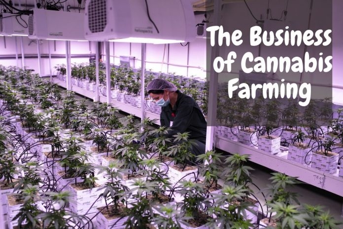 The Business of Cannabis Farming